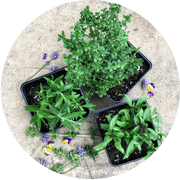 Seasonal Herb Subscription