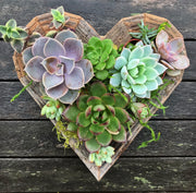 This succulent heart frame kit provides everything you need for the perfect gift.  The kit comes with succulents, design and care instructions, and redwood decorative frame.  Hang on the wall or use as a table centerpiece for your home decor!