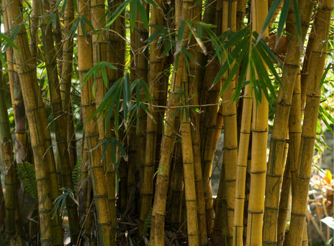 Sustainable bamboo tree
