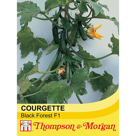 Courgette 'Black Forest' F1 Hybrid Seeds