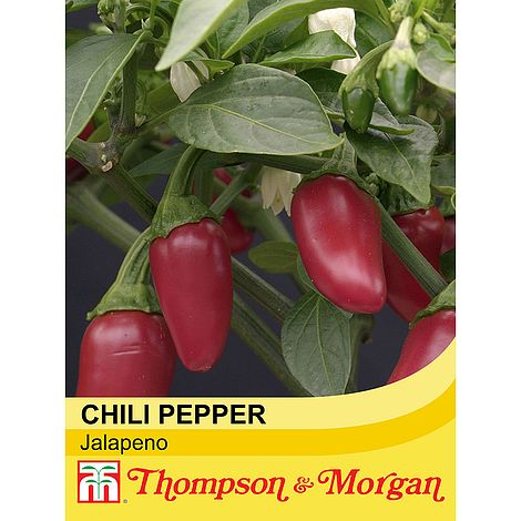 Chilli Pepper 'Jalapeno' Seeds