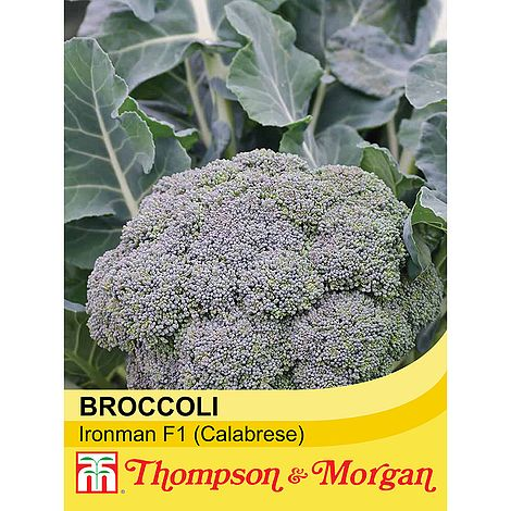 Broccoli 'Ironman' F1 Hybrid (Calabrese) Seeds