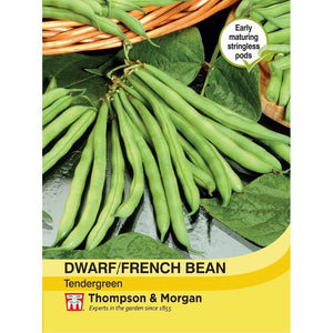 Dwarf Bean Tendergreen Seeds