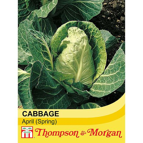 Cabbage 'April' (Spring) Seeds