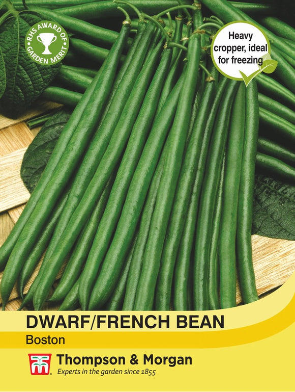 Dwarf Bean Boston Seeds