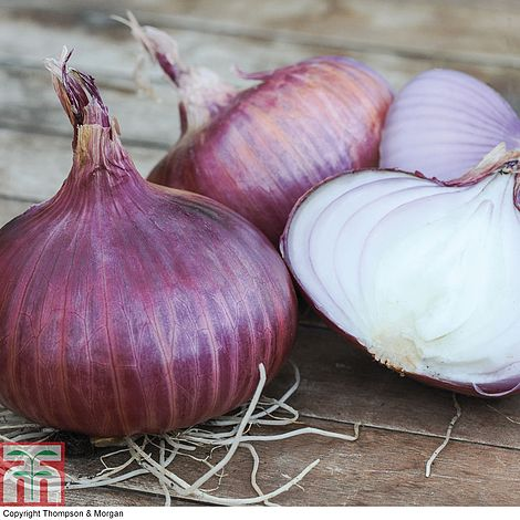 Onion 'Red Baron' (Spring Planting) Seeds