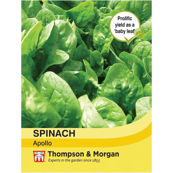 Spinach Apollo Seeds