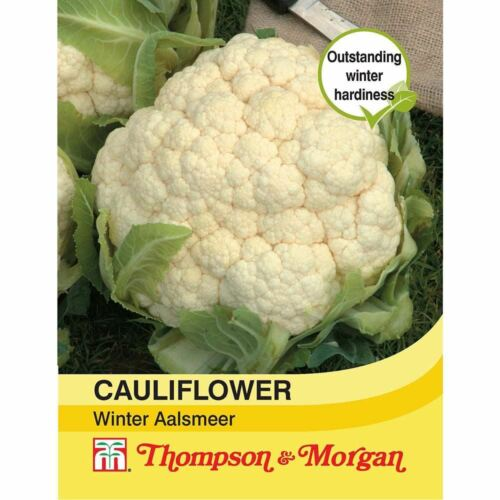 Cauliflower Winter Aalsmeer Seeds