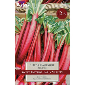 Rhubarb Red Champagne 1 Crown