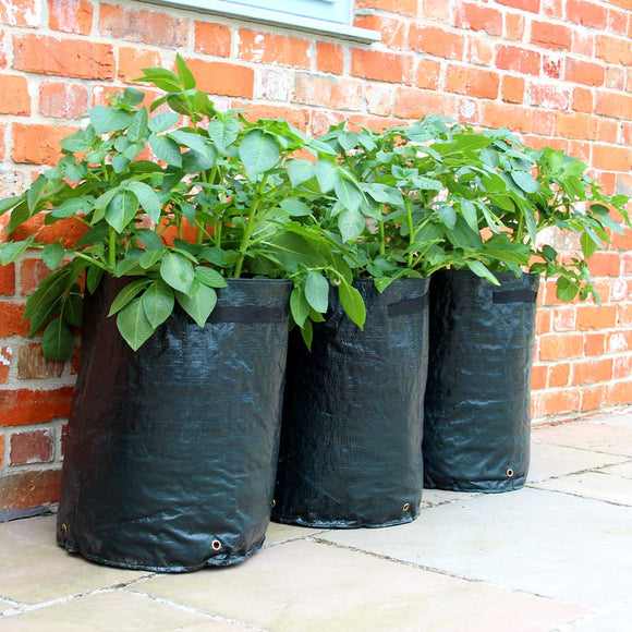 Haxnicks Potato Patio Planters
