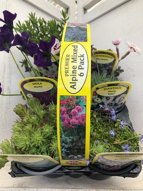 Alpine Mixed Carry Pack - 6 Plants 9cm