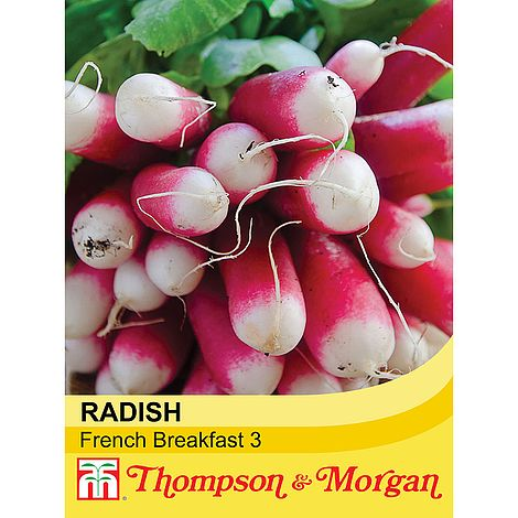 Radish 'French Breakfast 3' Seeds