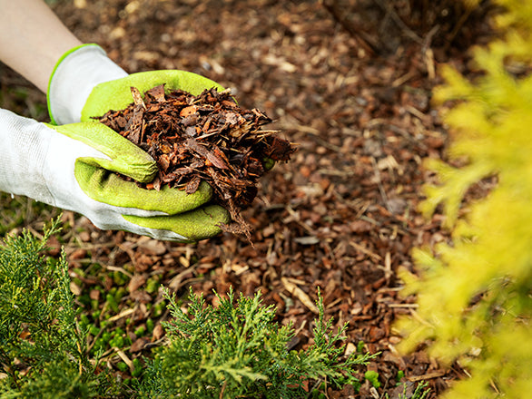 Use Organic Mulch-Not Landscape Fabric-To Control Weeds