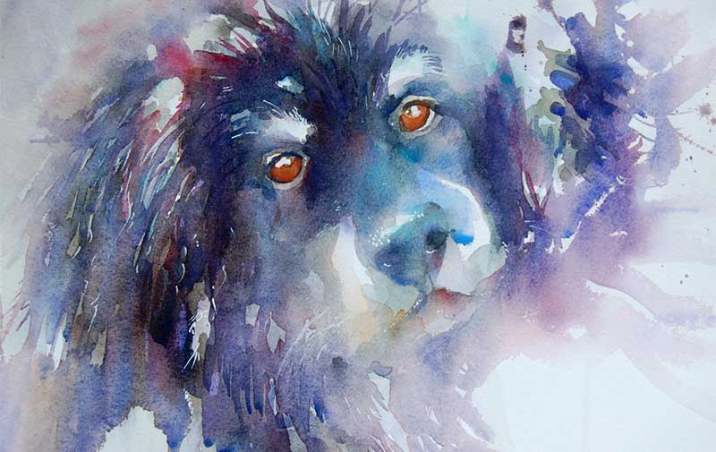 Dogs Gallery