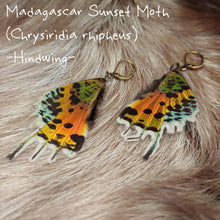 Load image into Gallery viewer, Butterfly Wing Earrings (Multiple Species Available) - *REAL WINGS*