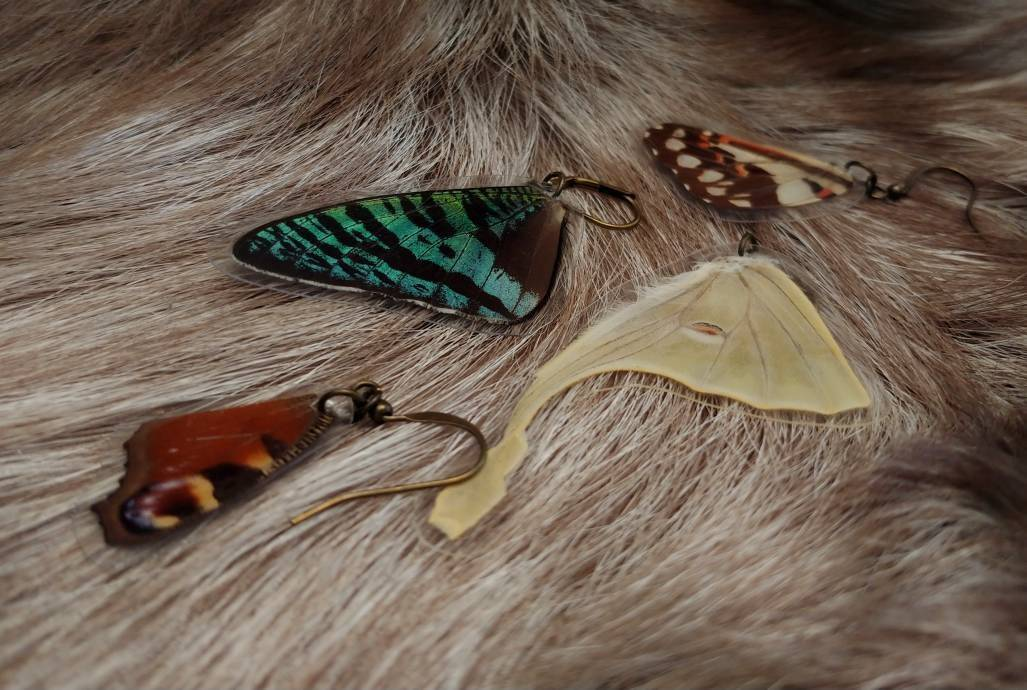 Butterfly Wing Earrings (Multiple Species Available) - *REAL WINGS*