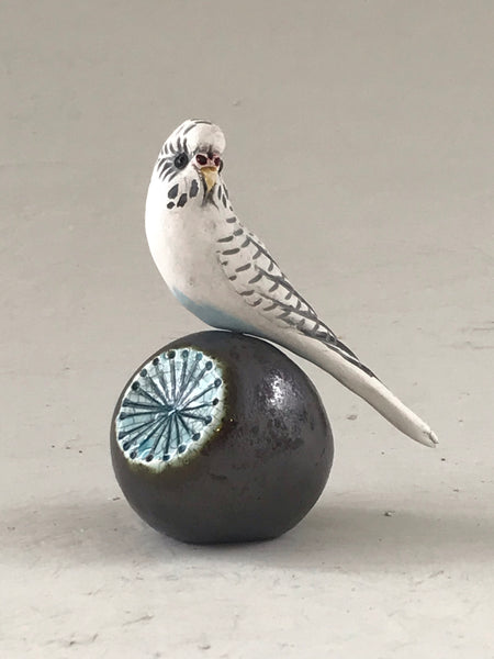 Small Budgie on ball