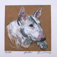 Watchful English Bullterrier