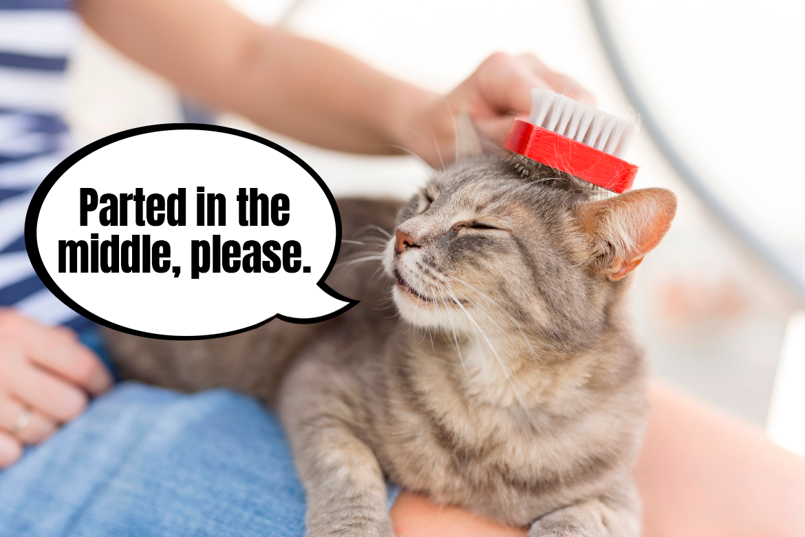 Brushing your cats: grooming for long- and shorthaired kitties