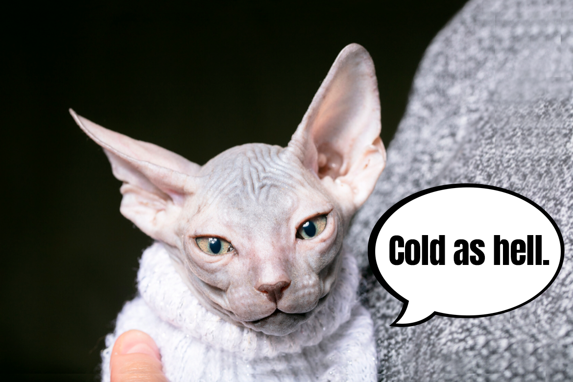 Supporting your cat's immune system during winter. Is it necessary?