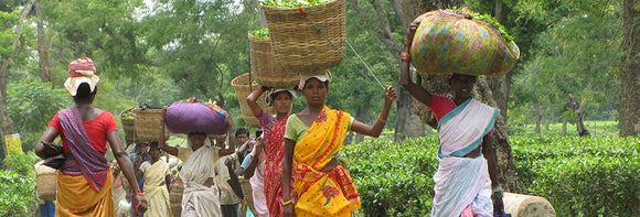 Ethical Tea Production