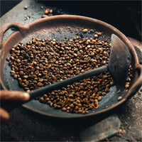 Do You Know About Kopi Luwak Coffee? - Coffee Life by EspressoWorks
