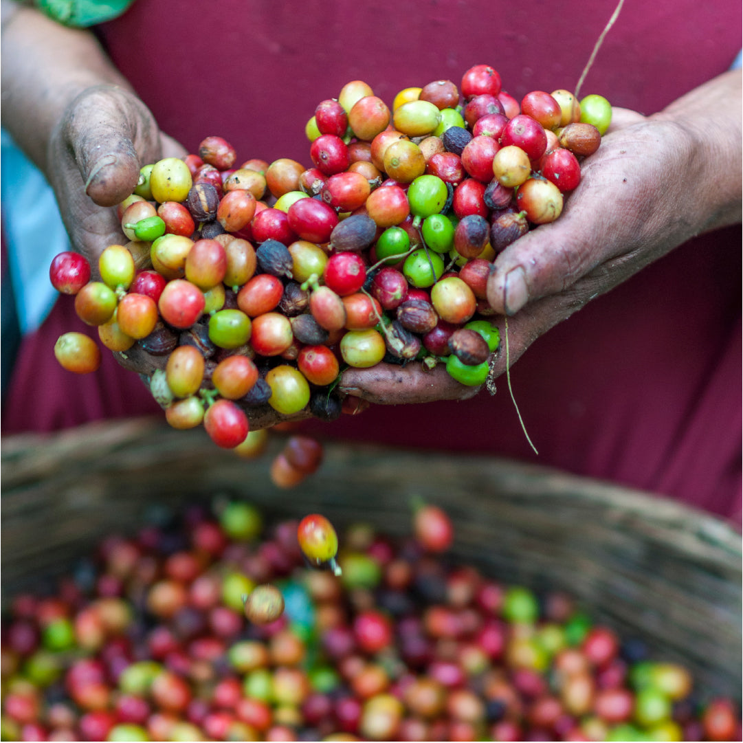 Farm to Machine: Learn How Coffee Is Made - Coffee Life, a blog by EspressoWorks