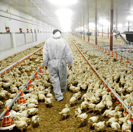 intensive meat farming is bad