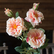 Load image into Gallery viewer, Faux Peach Garden Roses Stem, 3 assorted styles