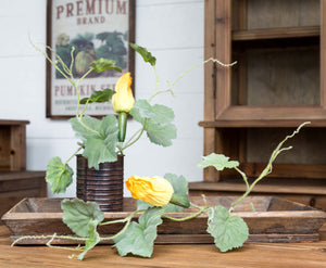 Fall Potted Squash Vine
