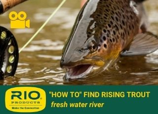 FRESHWATER RIVER: How to find rising trout