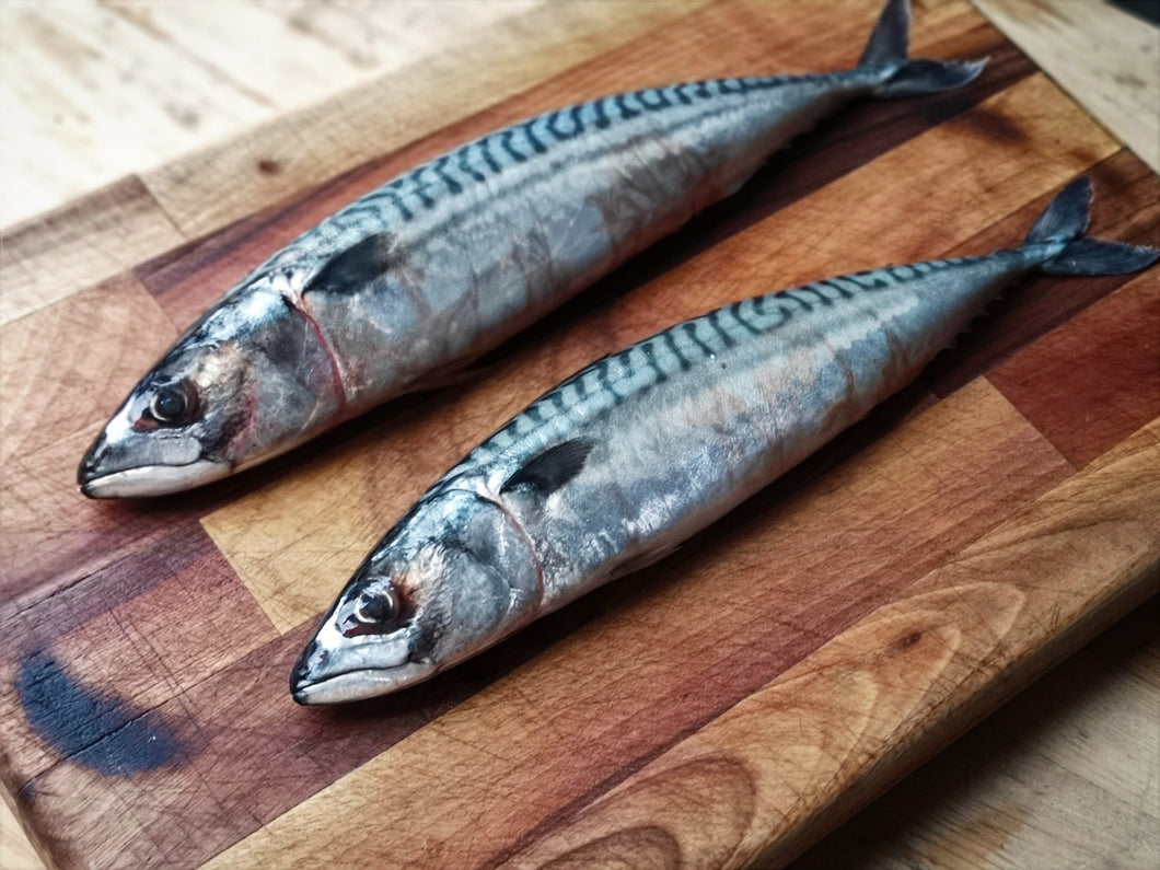 Mackerel x2