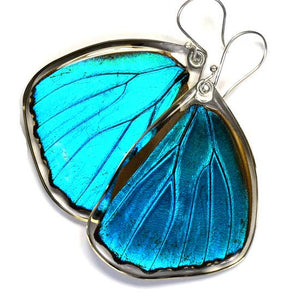 Blue Morpho Menelaus Earrings 0075