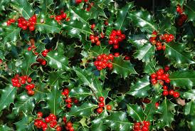 Holly Bunch