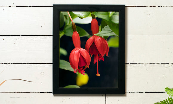 Hanging Red Flower Print