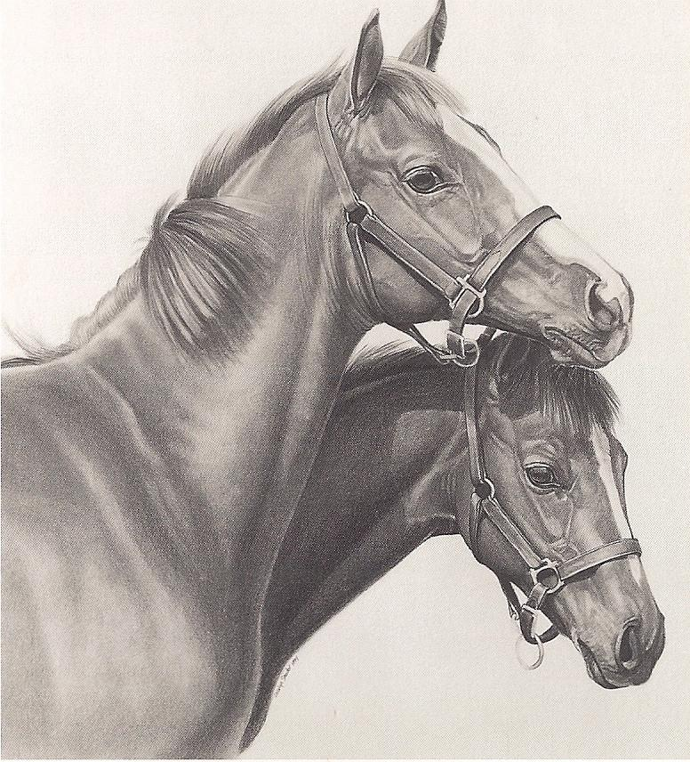 Graphite Horse Portrait Cards 12 Pack