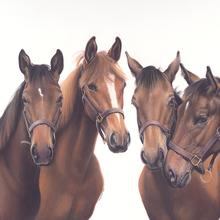 Horse Portrait Cards