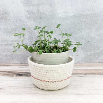 Mini Planter (red)