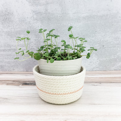 Mini Planter (orange)