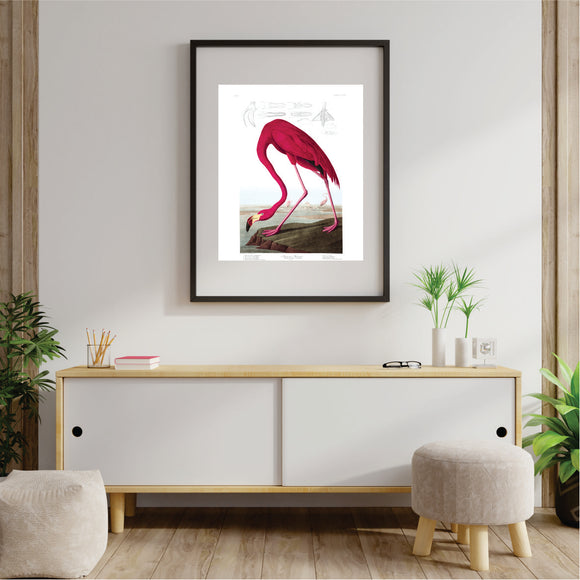 American flamingo 1 Art Print
