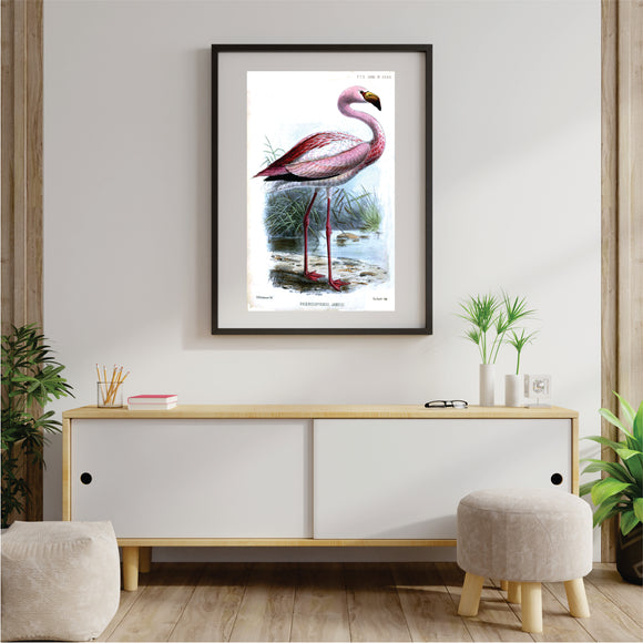 Flamingo Near Water Art Print