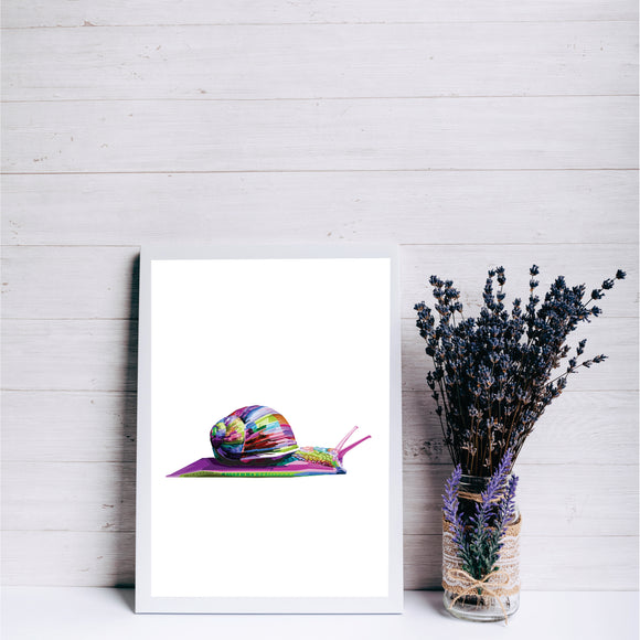 Colourful Snail Art Print