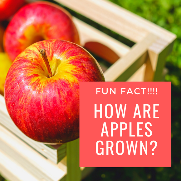 How Are Apples Grown?
