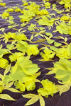 3D Flower Couture - Yellow