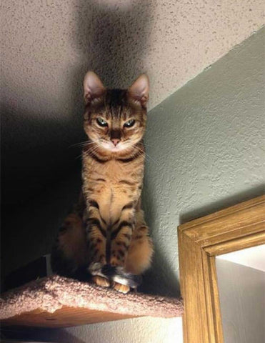 Beware of The Catto . Funny cat expressions