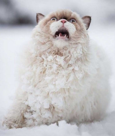 Nope, This kitty doesn't like the snow