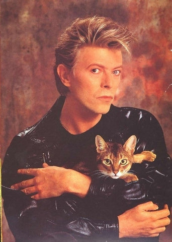 David Bowie the cat lover