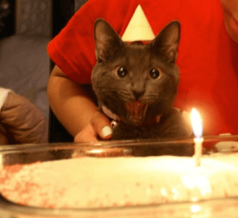 Happy Birthday To Me Cat Funny Cat Expressions 7