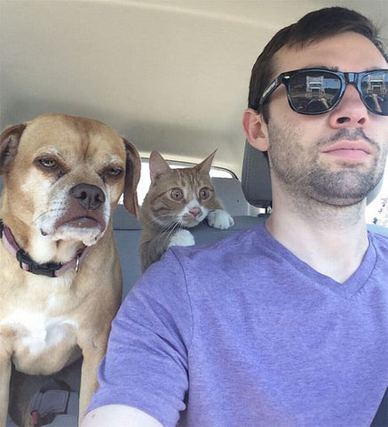 funny cat face dog and hooman travelling