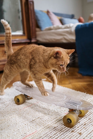 ginger cat is playing indoors jumping